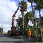 Palm Removal Auckland