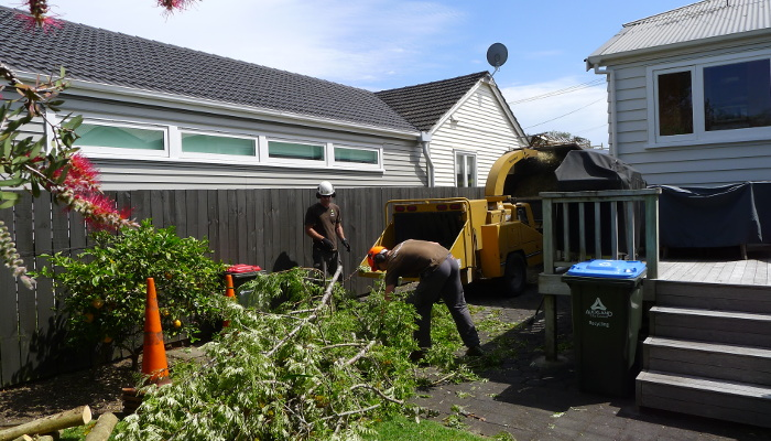 Tree Maintenance North Shore