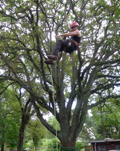 TreeZone tree services auckland 1
