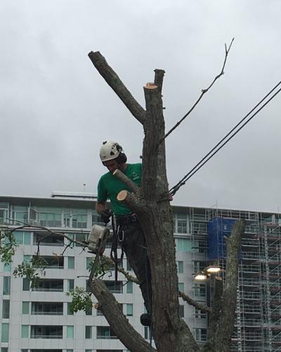 TreeZone tree services auckland 2