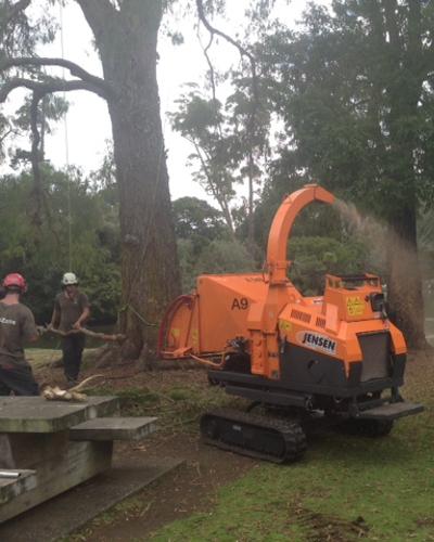 TreeZone tree services auckland 5