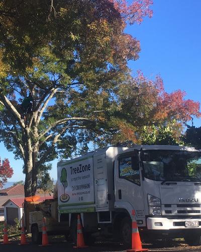 TreeZone tree services auckland 6