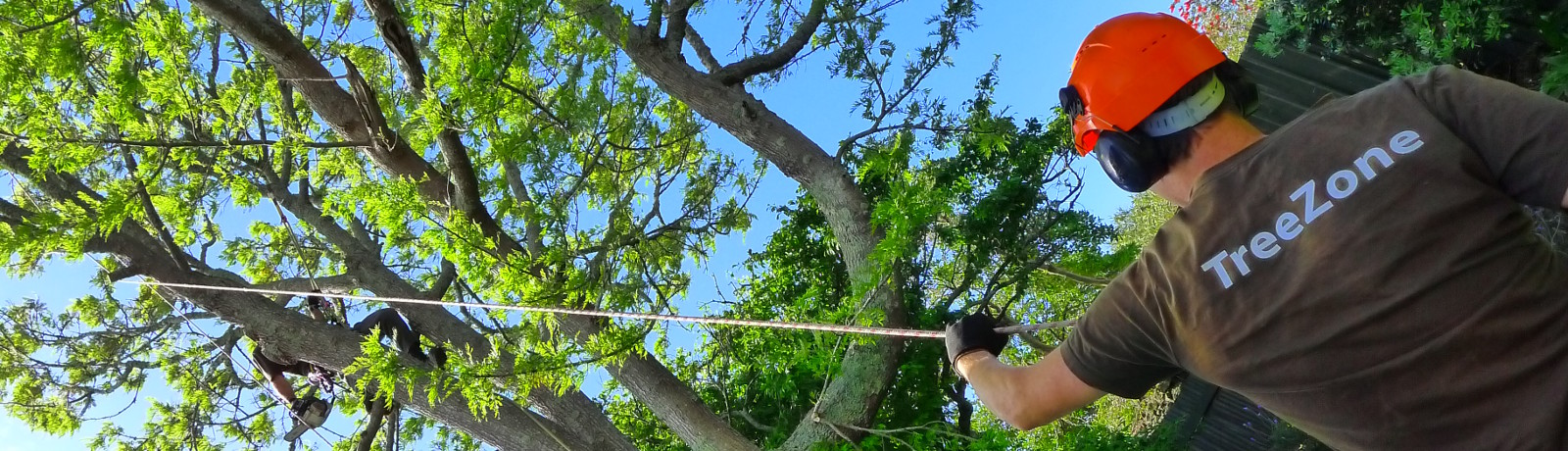 TreeZone North Shore Arborist