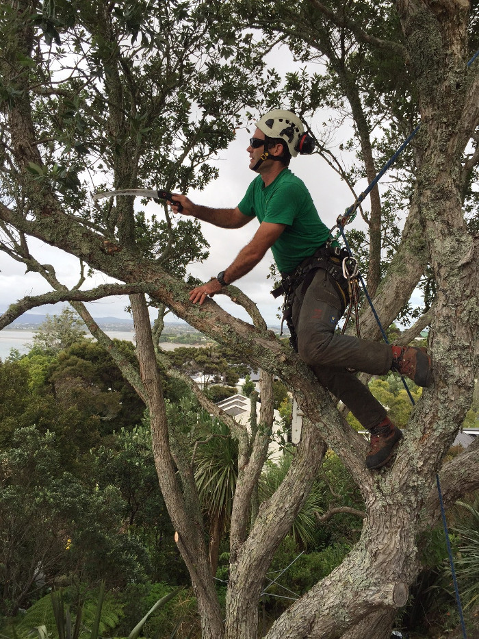 Tree Pruning North Shore